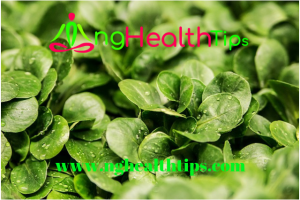 Health Tips For aged adults